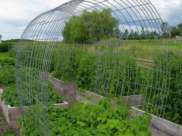 Cattle Panel Trellis With Versatile Purposes In Your Garden